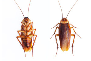 Pest Controll Roaches